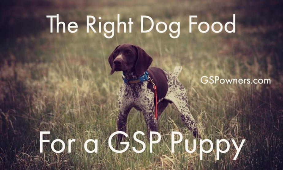 choosing-gsp-pupp-dog-food