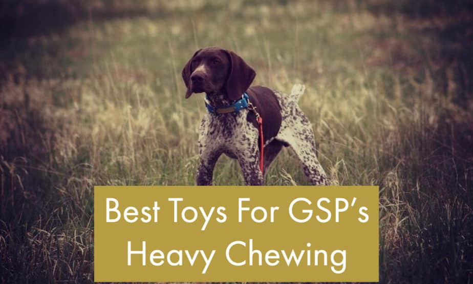 gsp-puppy-tough-toys-for-heavy-chewers
