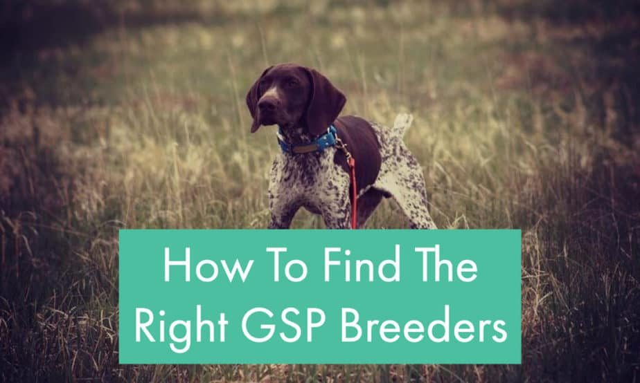 selecting-a-gsp-breeder-tips